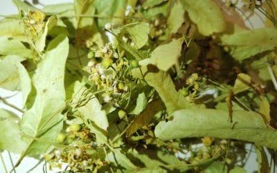 Plantes simples : pourquoi les vendre pré-emballées ?